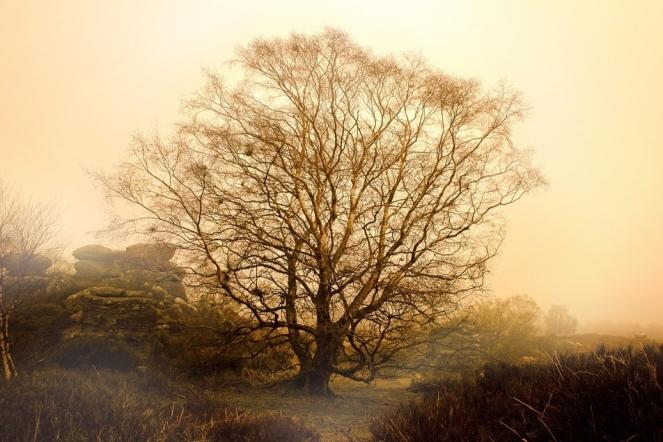 weather-trees-winter-tree-autumn-seasons-fog-316318.jpg