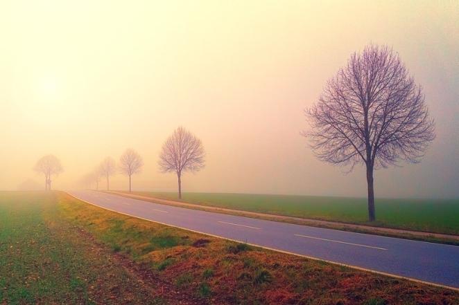 Landscape Dawn Trees Grass Road Fog Avenue