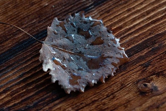 Wood Brown Leaves Drop Of Water Leaf Wet