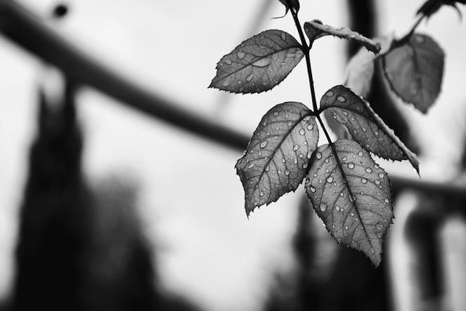 Water Plant Leaf Rain Plan Nature Drops Leaves