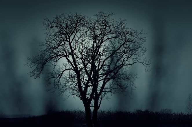 Black Halloween Dark Mysterious Silhouette Tree